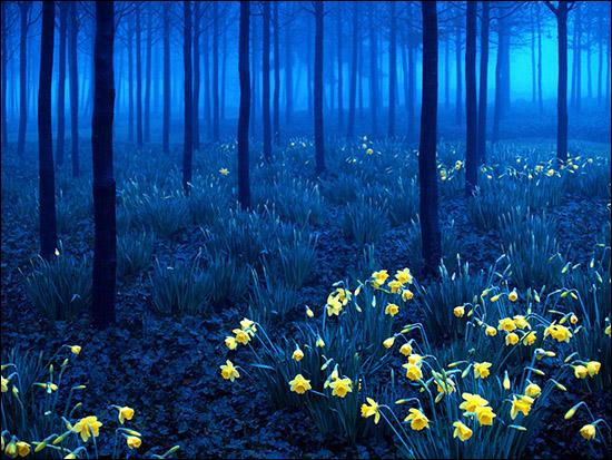 Черный лес в Германии