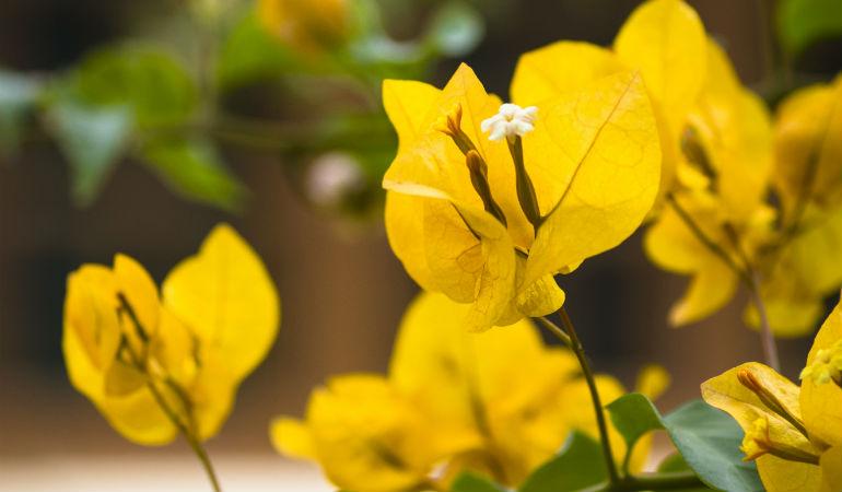 Таиланд, цветы